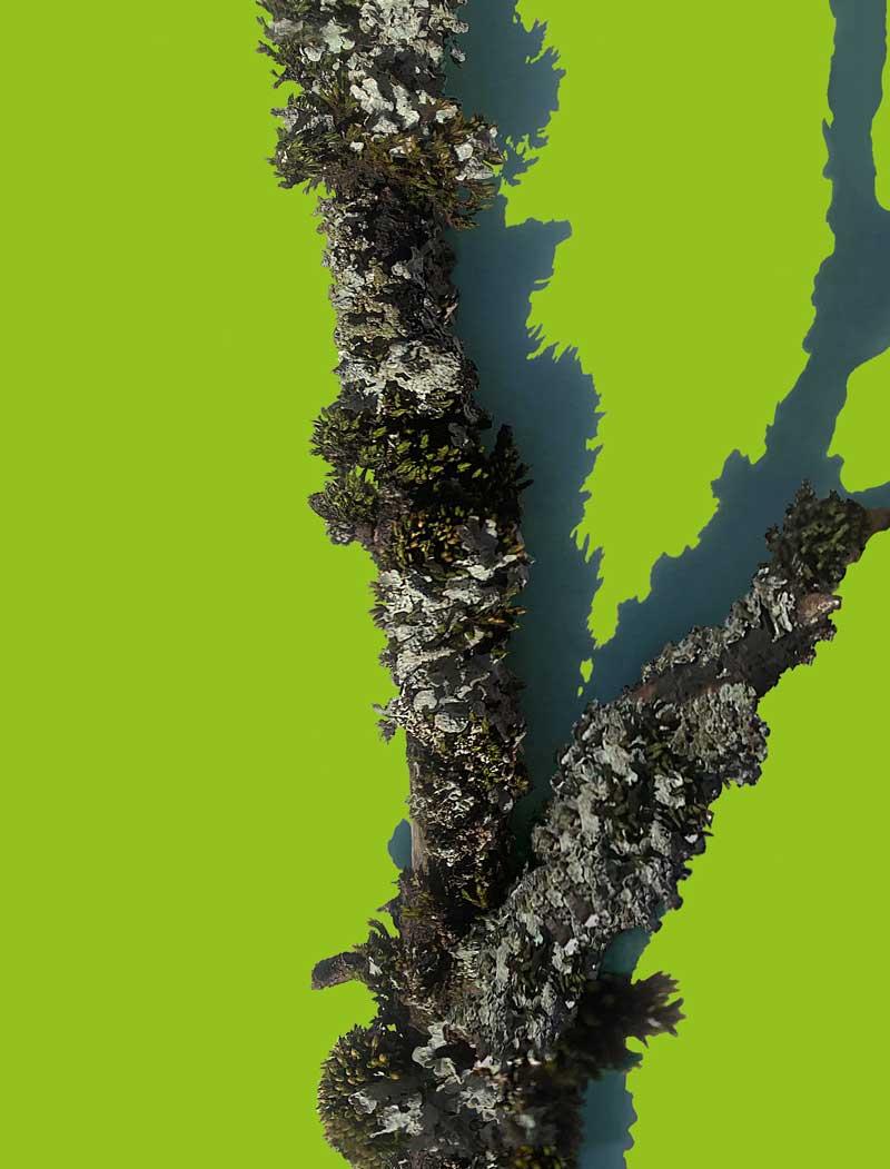 Grün-Sondergrösse