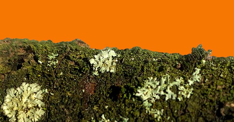 Orange-Neon-A5_6