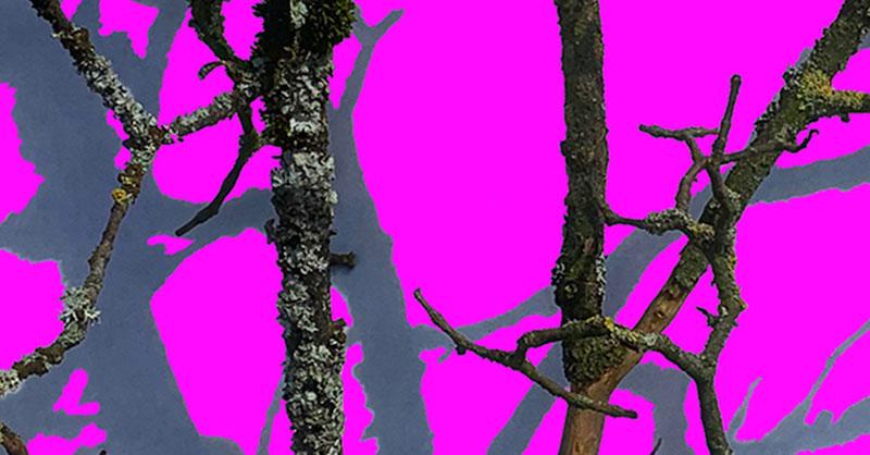 Pink-A5_6